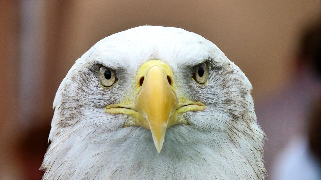 Teatown Hudson River EagleFest