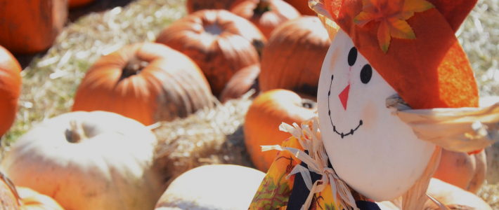 The Best Farms for Pumpkin-Picking in the Hudson Valley