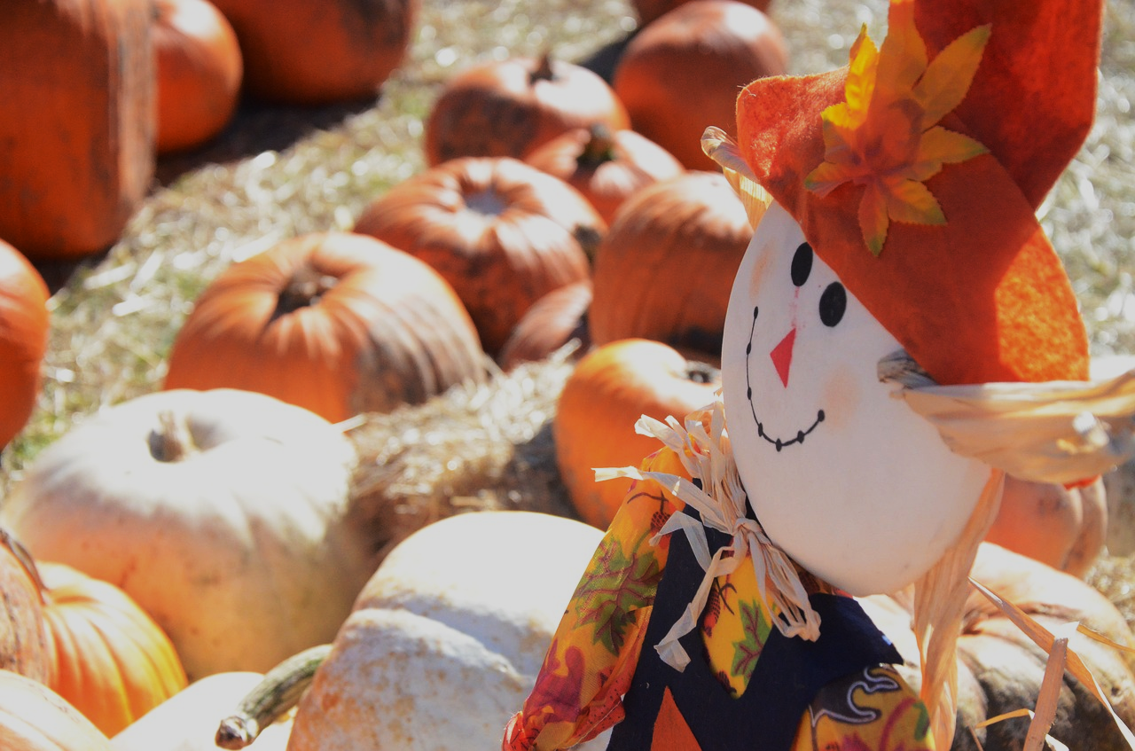 Pumpkins and scarecrow at Prospect Hill Orchards in Milton, New York