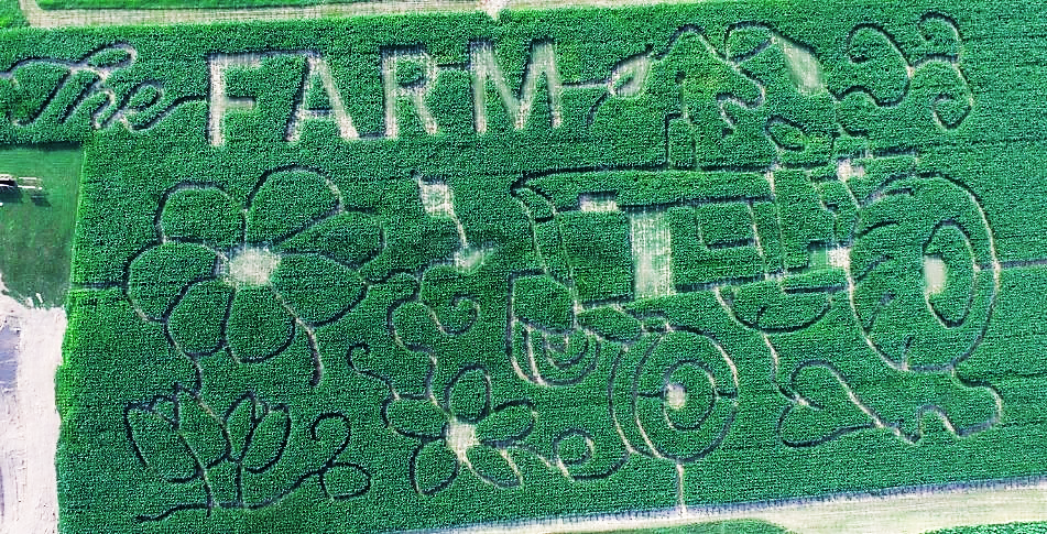 Aerial view of corn maze at Twin Ponds on the Farm in Montgomery, New York