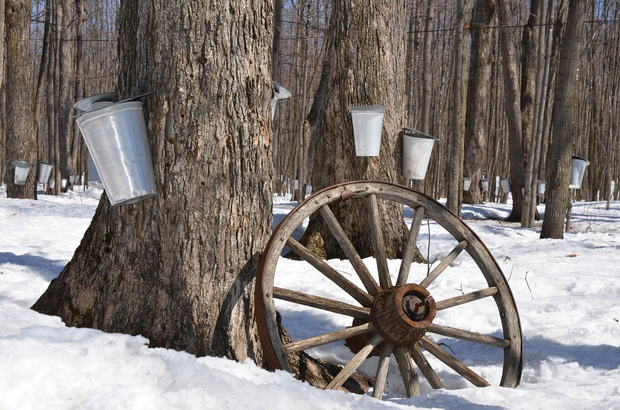 sweet sap taps at Maple Leaf Sugaring in Ghent, New York